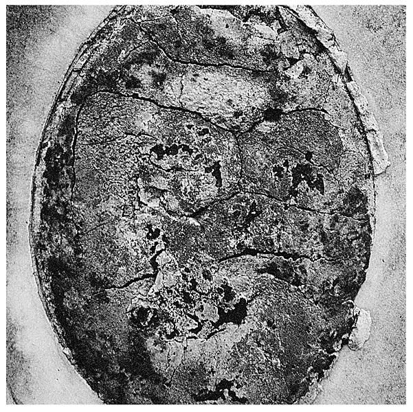 Andrew Polushkin, Memory Erosion